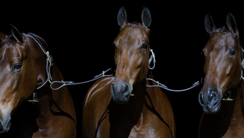Curso de presentación de caballos en concursos Morfológicos impartido por Carlos Pinta en Ciudad Real